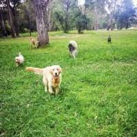 Dogs exploring grass at Banksia Park Melbourne.